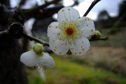 奈良の風景 by Sカメラマン